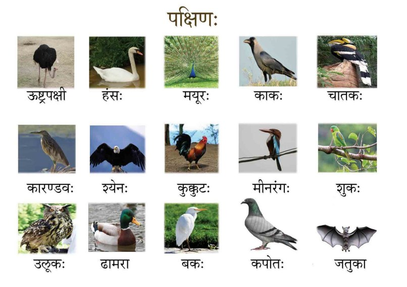 Indian Birds Pictures With Names In Hindi Wikipedia