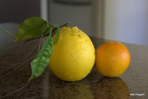 Homegrown Oranges at Ranga's