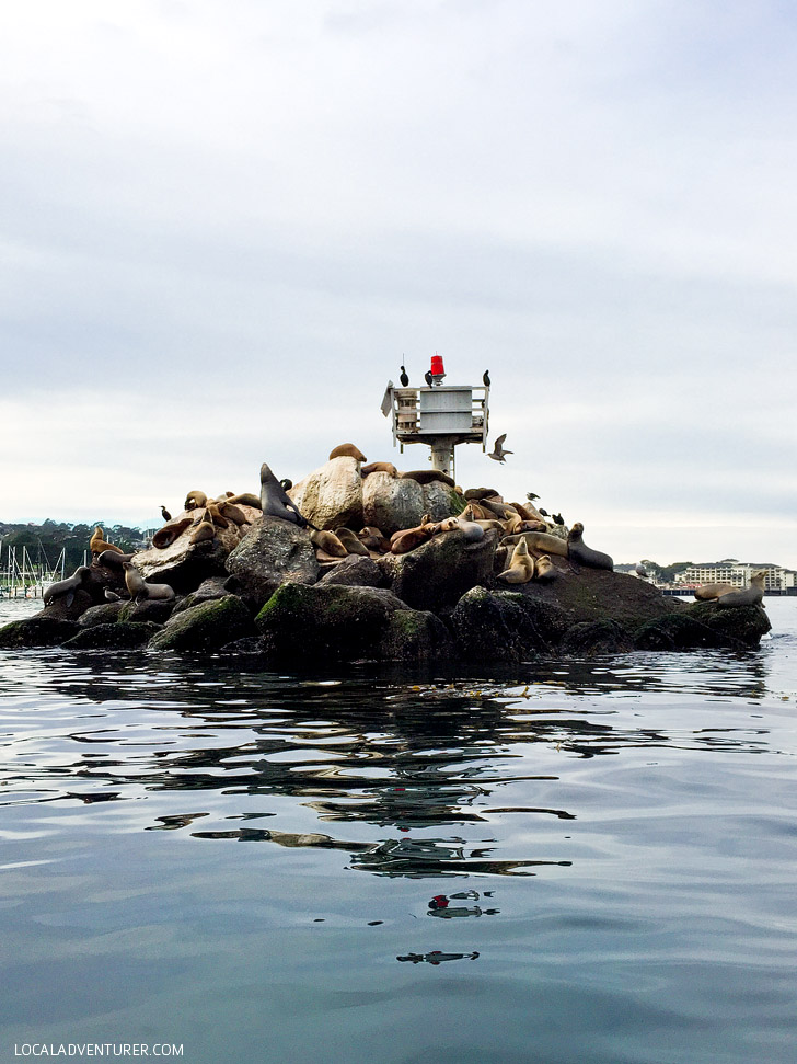 Spotting California Sea Lions at Coast Guard Pier Monterey.