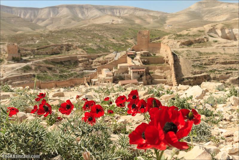 Одно фото / Мар Саба в цвету