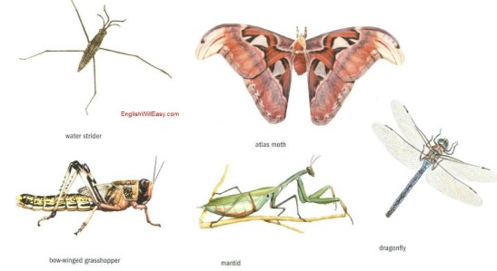 examples of  insects
