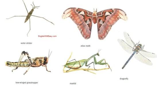 ejemplos de insectos