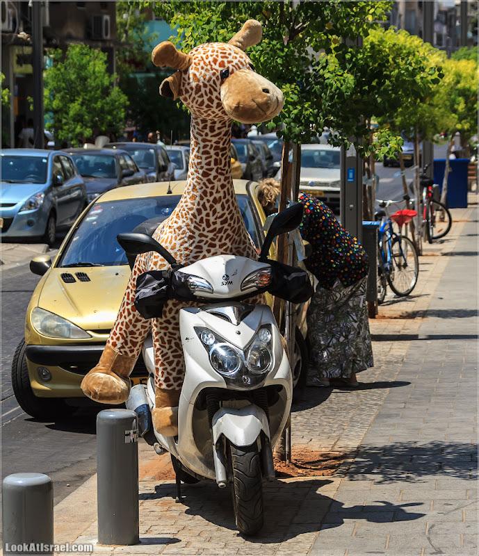 Одно фото / Жирафа