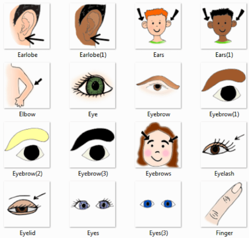 Body Parts Pictures for Classroom and Therapy