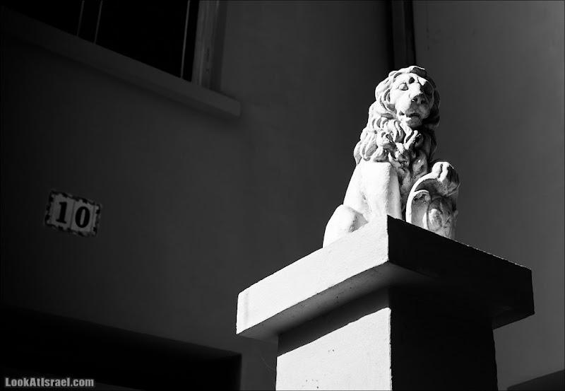 Одно фото льва тель авивского