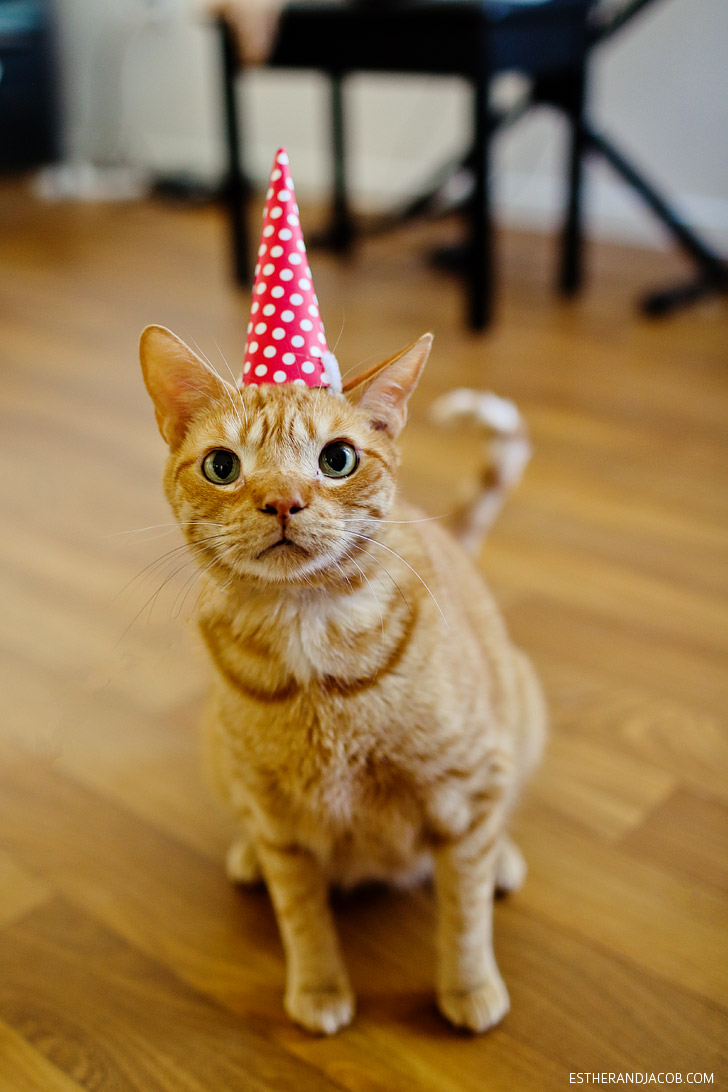 A Cat Birthday Celebration - A Cat in a Birthday Hat.