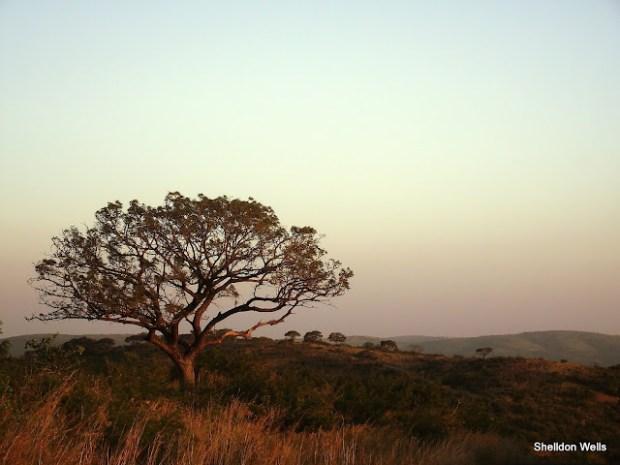 Hluhluwe Imfolozi Landscape