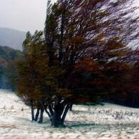 Copacul fără pădure