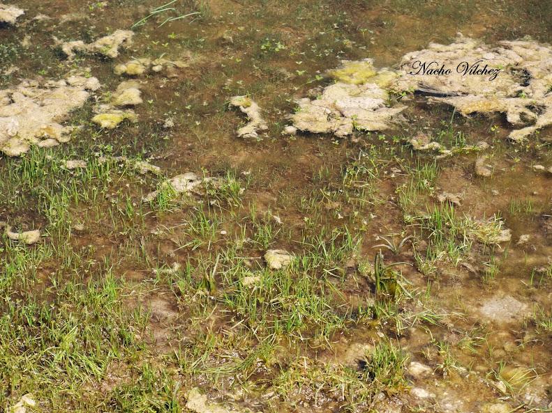 Charco del Negro - Lagunas de Sierra de Loja (Loja) 13.04.13 (6/6)