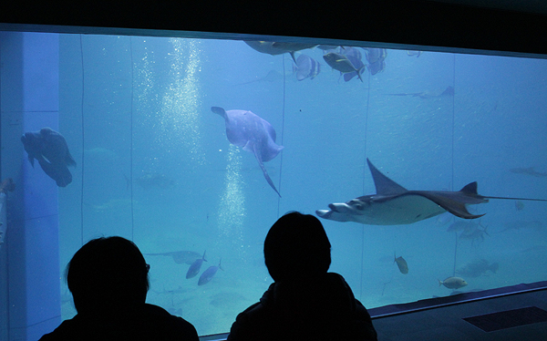 osaka aquarium, top places to visit in Japan Osaka, top aquariums, best aquariums in Asia, travel Japan, Japan sightseeing