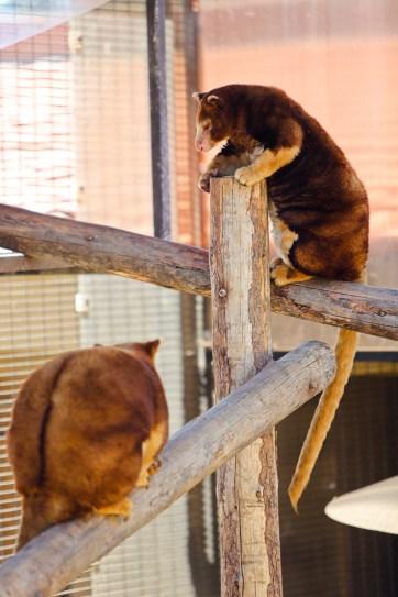 San Diego Zoo Animals.