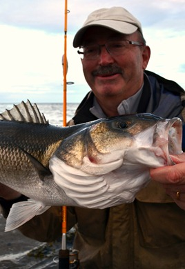 Bass fishing Ireland