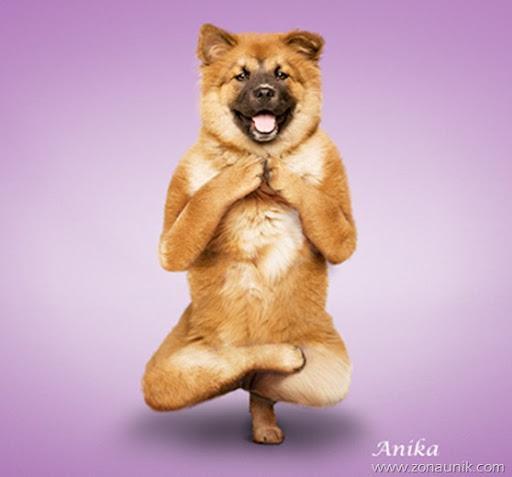 Anjing Senam Yoga (2)