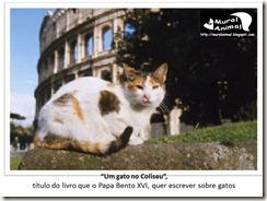 papa_ama_gatos (26)
