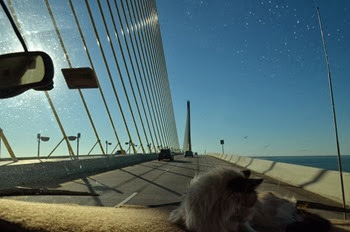 up on the Sunshine Skyway