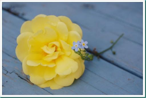 yellow texas