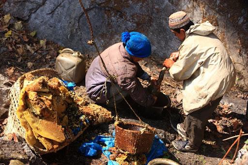 honey-cacciatori-nepal-37