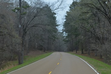 dark and dreary day on the Natchez Trace