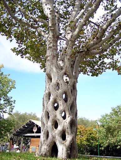 tree-shaping-16