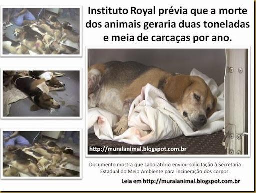 Instituto Royal prévia que a morte dos animais