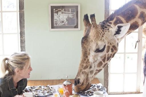 giraffa-manor-0