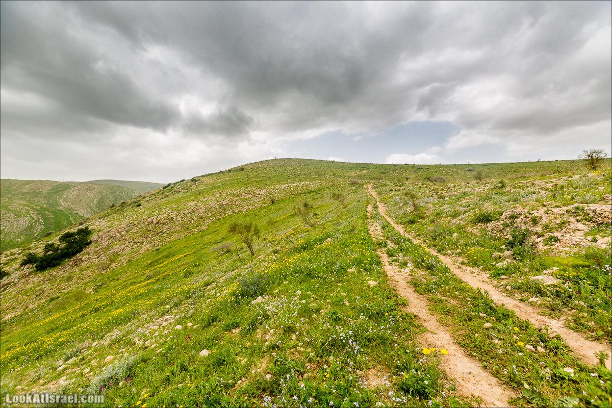 LookAtIsrael.com - Заповедник Ум Зука в Иорданской долине, Израиль   Um Zuka Reserve, Jordan valley, Israel   שמורת אום זוקה בבקעת ירדן