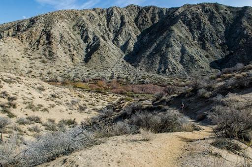 Big Morongo Canyon (6 of 63)
