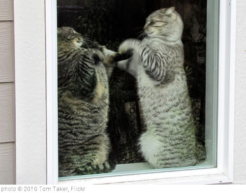 'Cat fight' photo (c) 2010, Tom Taker - license: http://creativecommons.org/licenses/by/2.0/