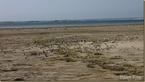 Birding south beach_096