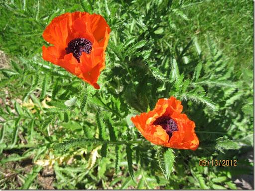 flowers2012 006