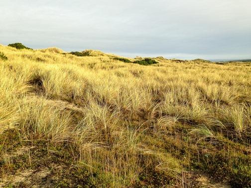 Bullards Beach iPhone (4 of 9)