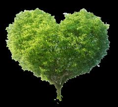 arbrecoeur