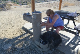 fresh water, even fresh doggie water at the shelter