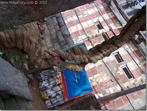 Vidya Sury Tree