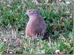 One of three of our furry little friends, Red Rock RV Park, Henry's Lake, ID