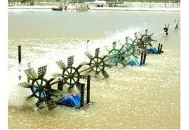 Thuoctim  - Thuoctim thumb 25255B4 25255D - Sử dụng thuốc tím trong quản lý chất lượng nước