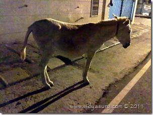 VidyaSury Donkeybymoonlight
