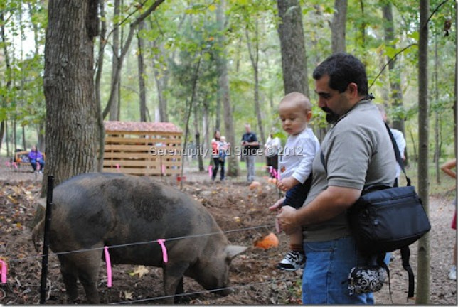 Red Wolf Farms Pig
