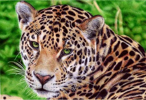 Desenho de jaguar feito de caneta BIC