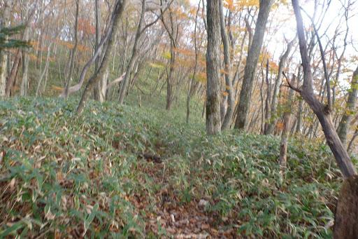落ち葉の合間には倒木や根っこがあったり無かったり、それを声ながらも登っていきます。傾斜は5〜7%くらいかな?