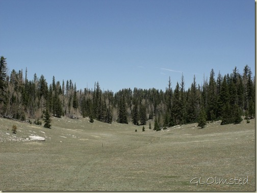 Arizona trail thru meadow along FR610 S Kaibab National Forest Arizona