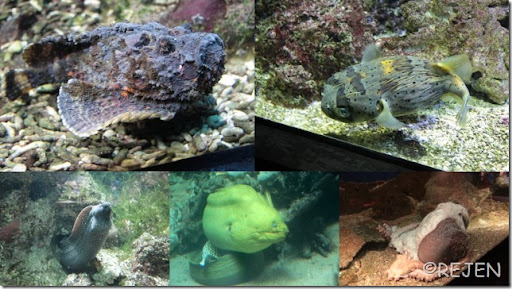 Danmarks Akvarium Juli 20125