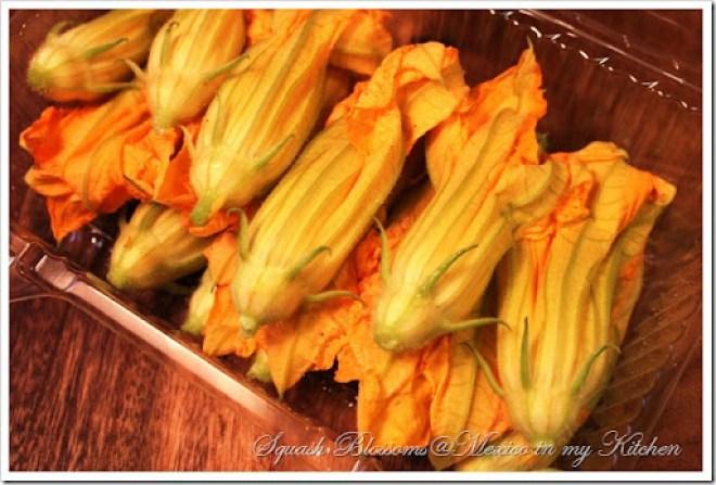 squash blossom for quesadillas