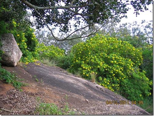 VidyaSury more yellow