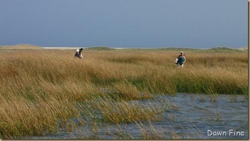 Birding south beach_084