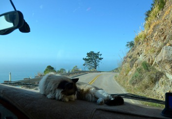 driving Highway 1