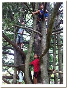 kids in a tree