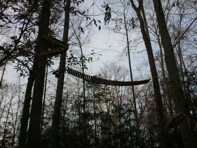 Treetop Travelers