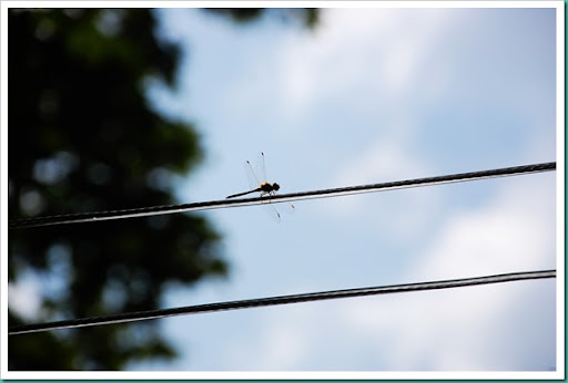 Dragonfly clothesline