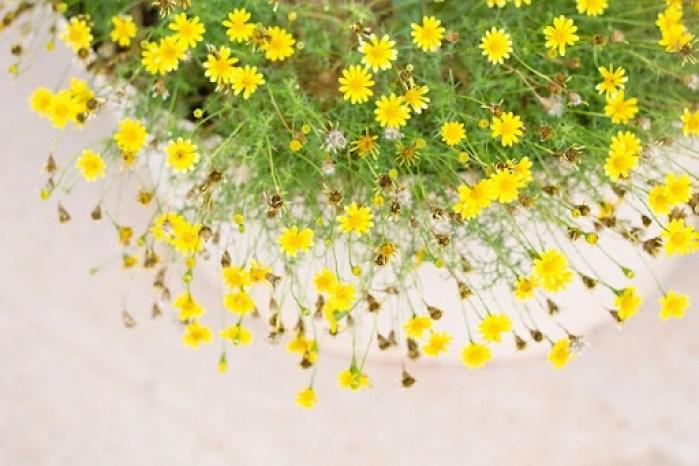 st george flowers